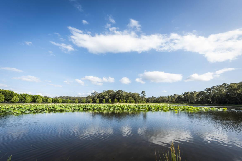 Lotus-lake.jpg